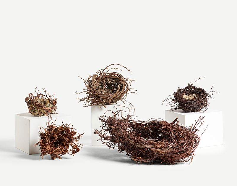 Birch Nest With Apple Prunings