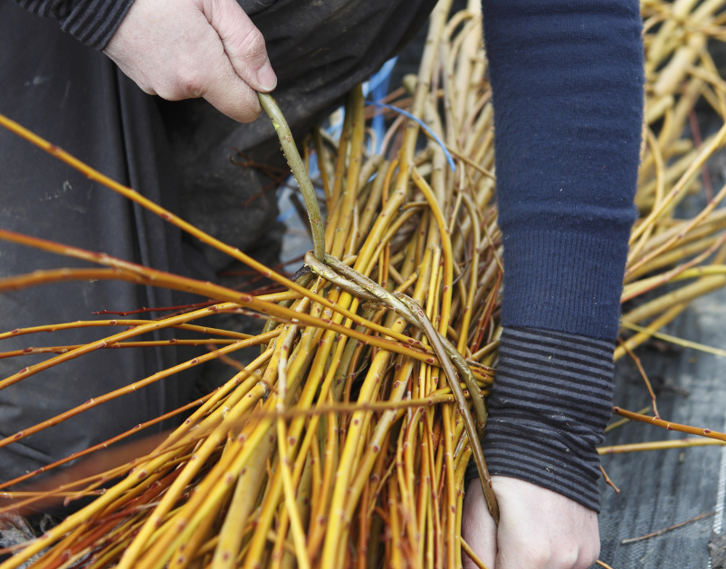 Annemarie-Osullivan, Willow against wall- The New Craftsmen