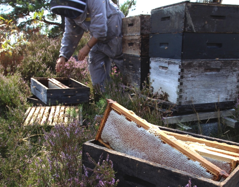 The London Honey Company Beekeeping Process - The New Craftsmen